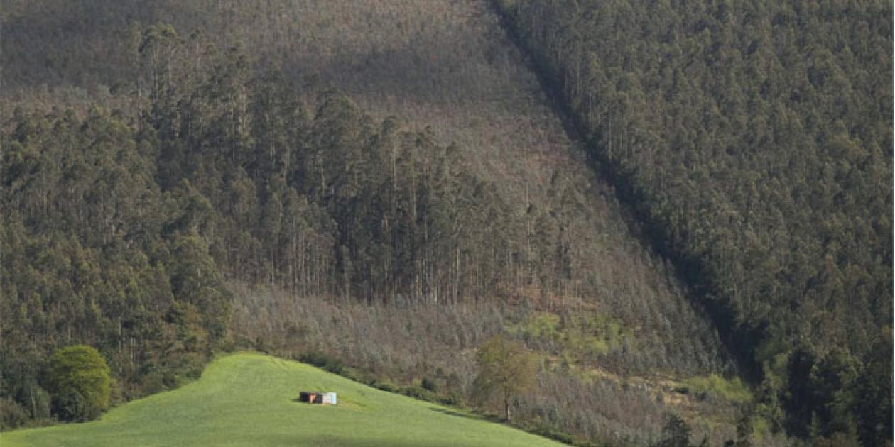 Galicia promueve la construcción en madera de centros de salud y colegios