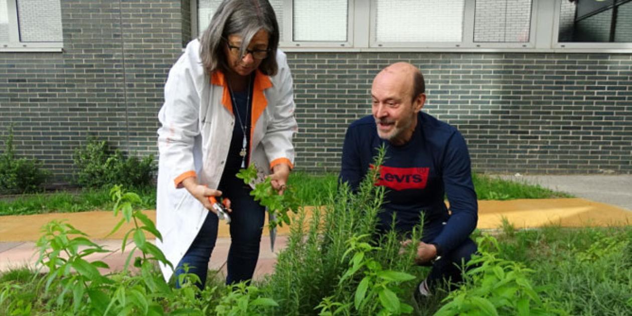 El Hospital de Sant Pau estrena jardines terapéuticos